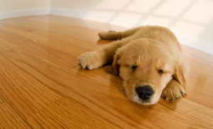 Pet Friendly Flooring Options