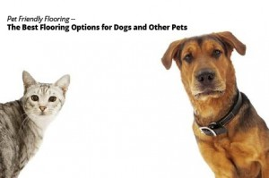 Pet Friendly Flooring: The Best Flooring Options for Dogs and Other Pets
